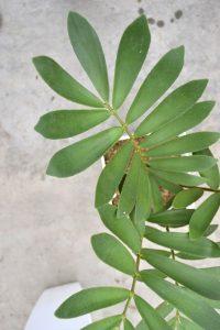 観葉植物のサイト